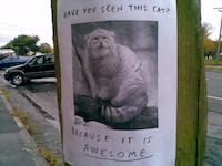Have you seen this cat? Because it is awesome.